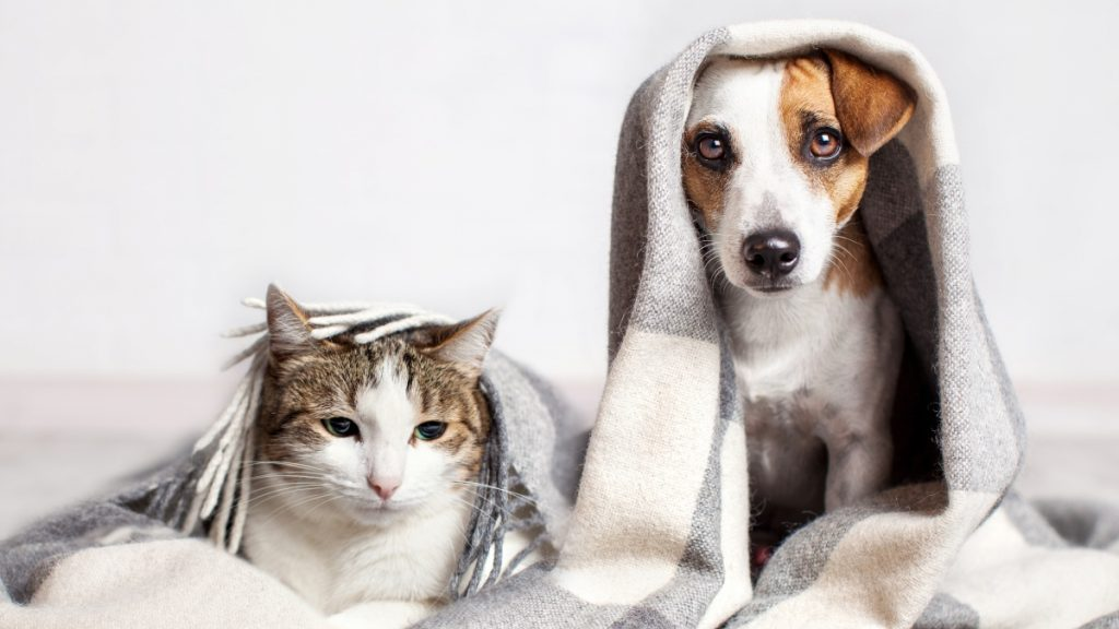 bisnis startup perawatan hewan